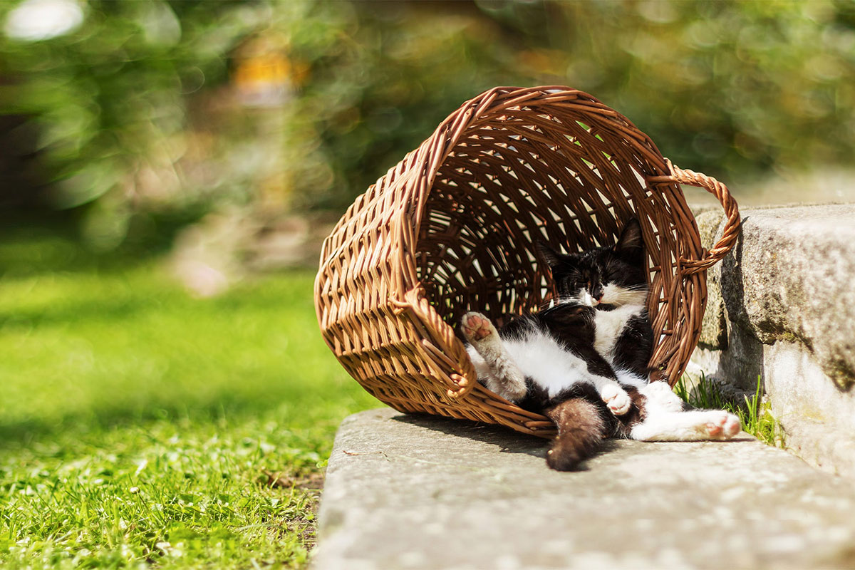 Fluffy cat asleep outside in a wicker basket