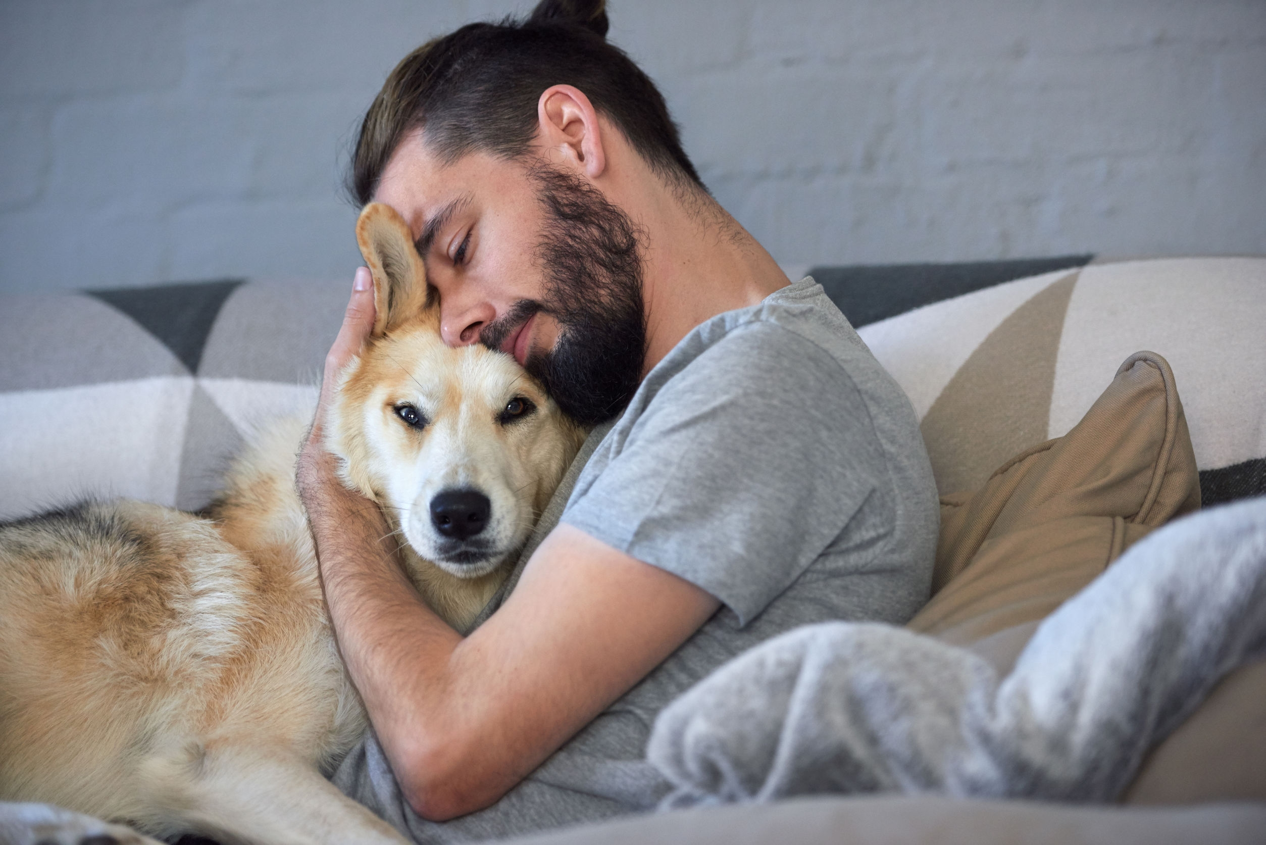 man on the sofa hugging his labrador on valentines day