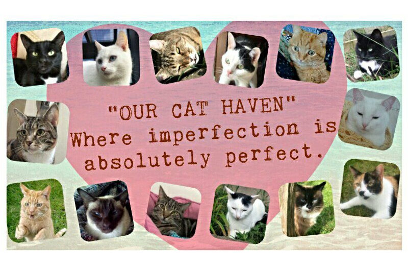 Cat-Haven-Pic