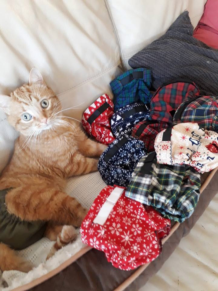 Forest-With-His-Christmas-Pants