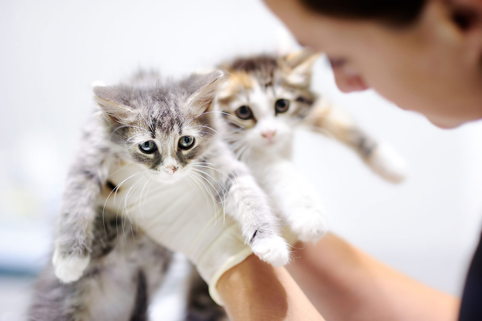 How to Prepare Your Cat for Surgery foto