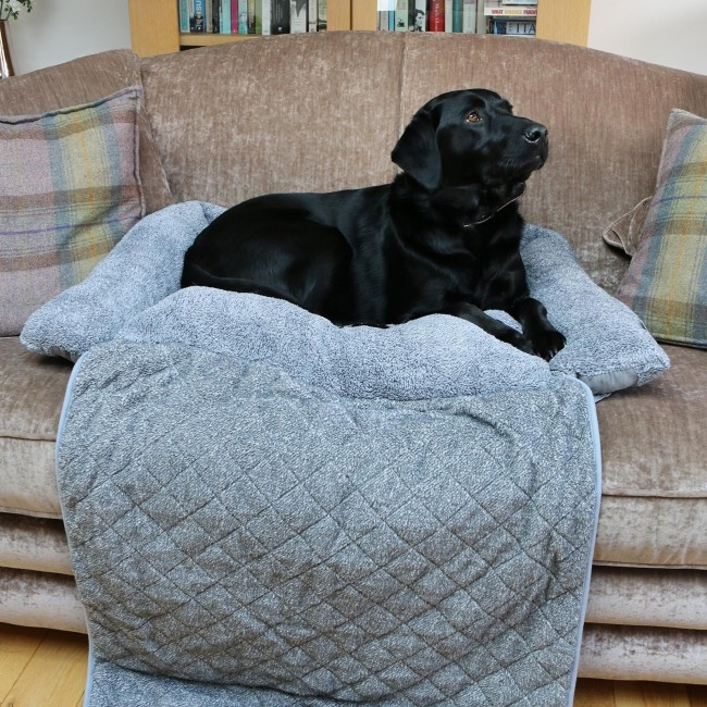 black labrador on a sofa protector pet bed on the sofa