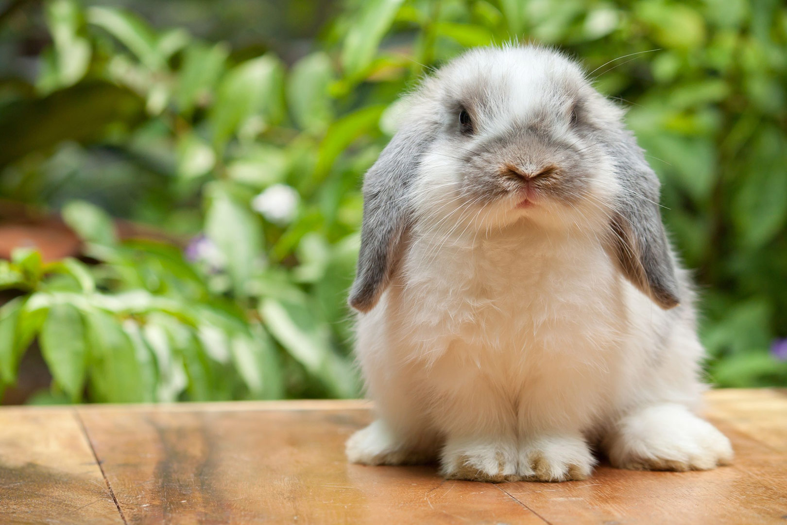 image-of-fluffy-bunny-outside