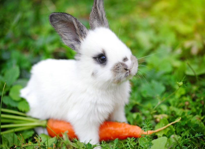 image-of-a-rabbit-with-a-carrot-in-the-garden