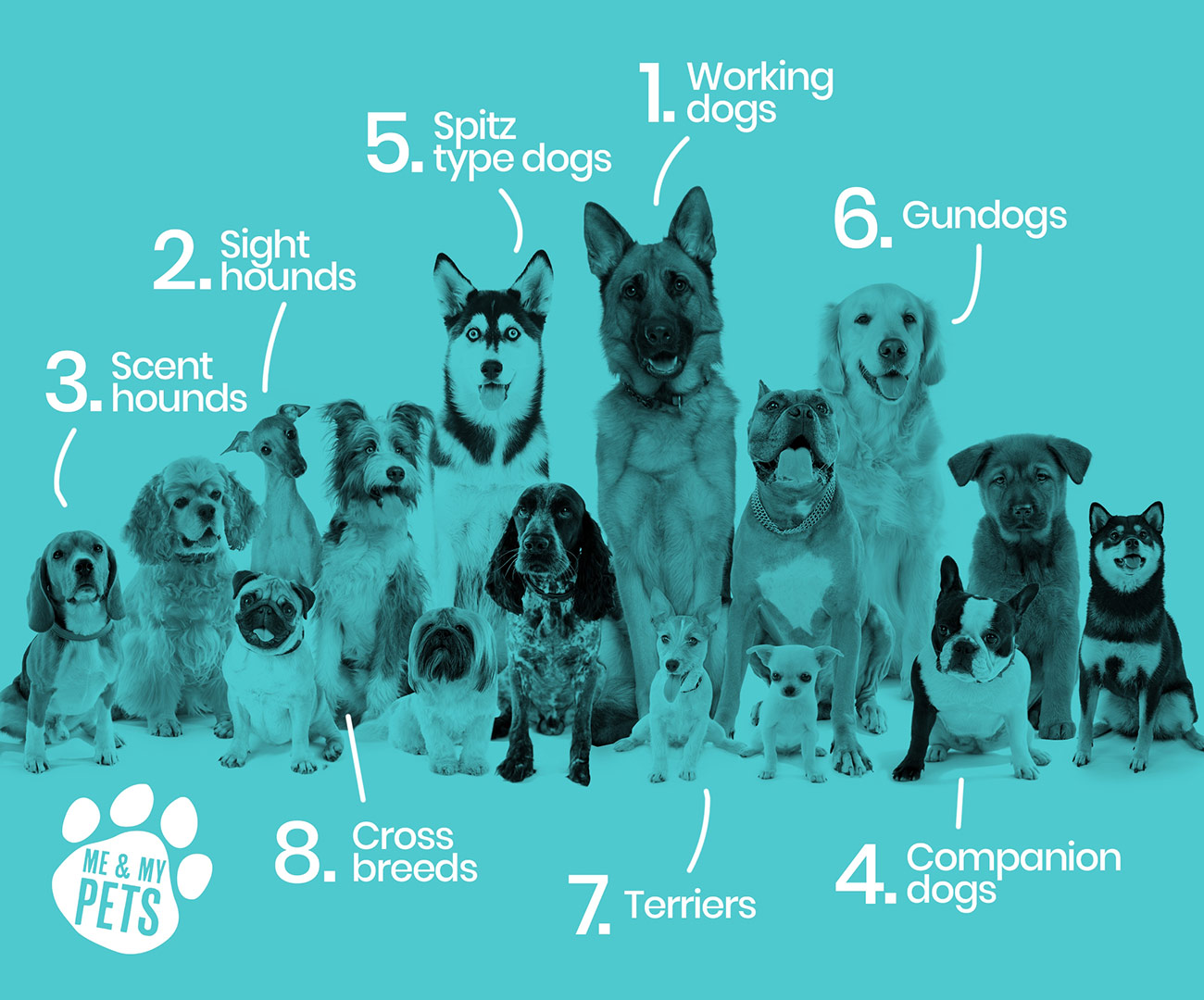 blue graphic with types of dogs indicated on