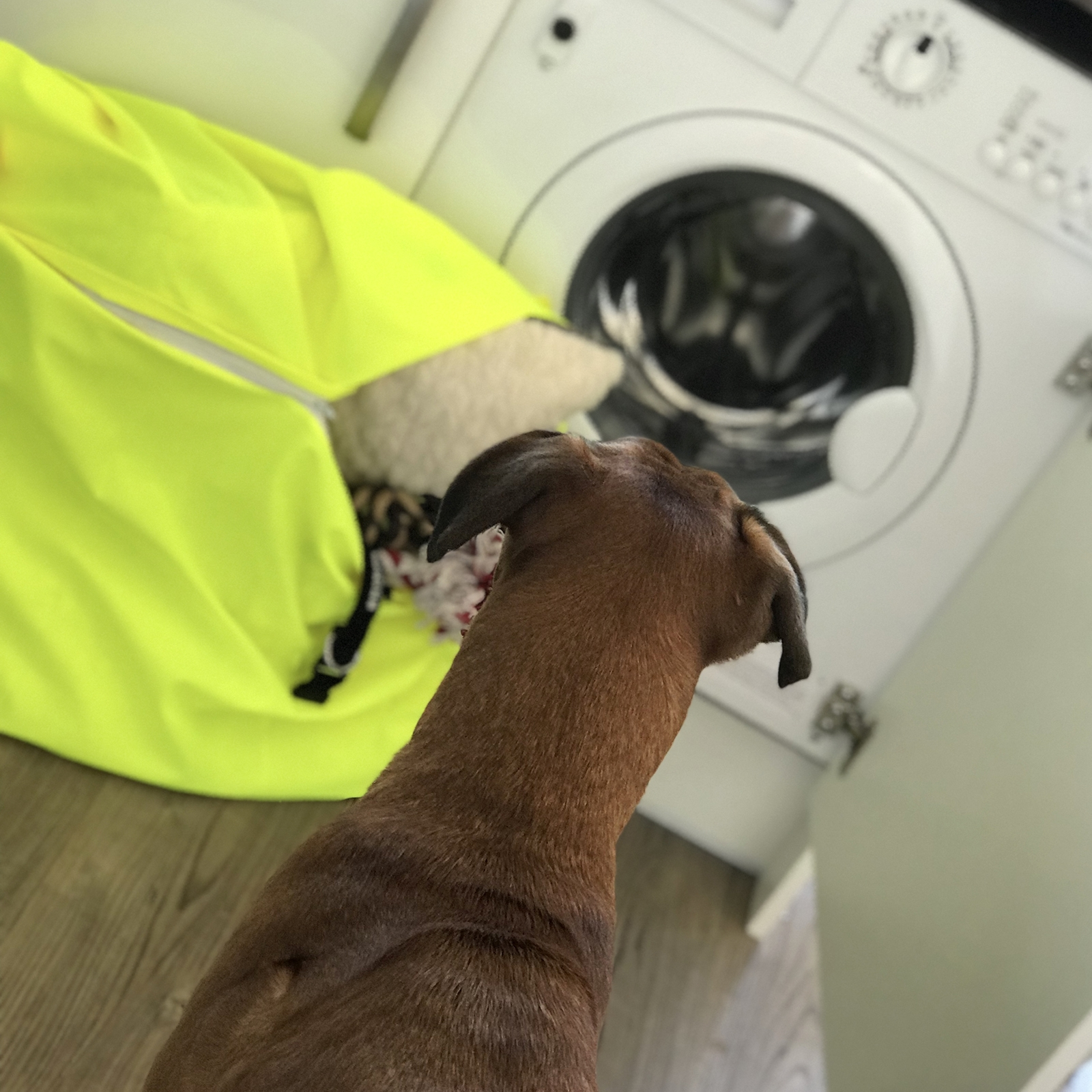 boxer dog sitting in front of a washing machine waiting for toys to be washed in Laundry Bag