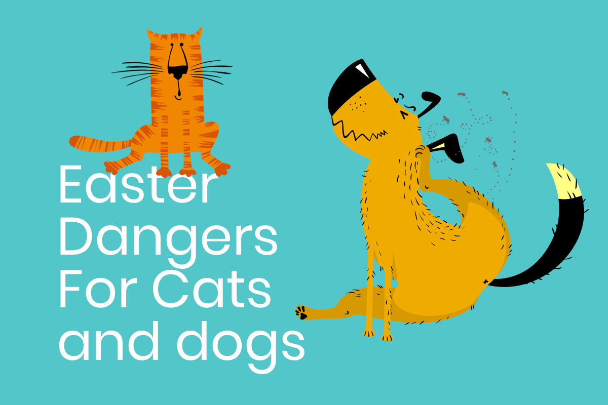 Easter dangers for cats and dogs