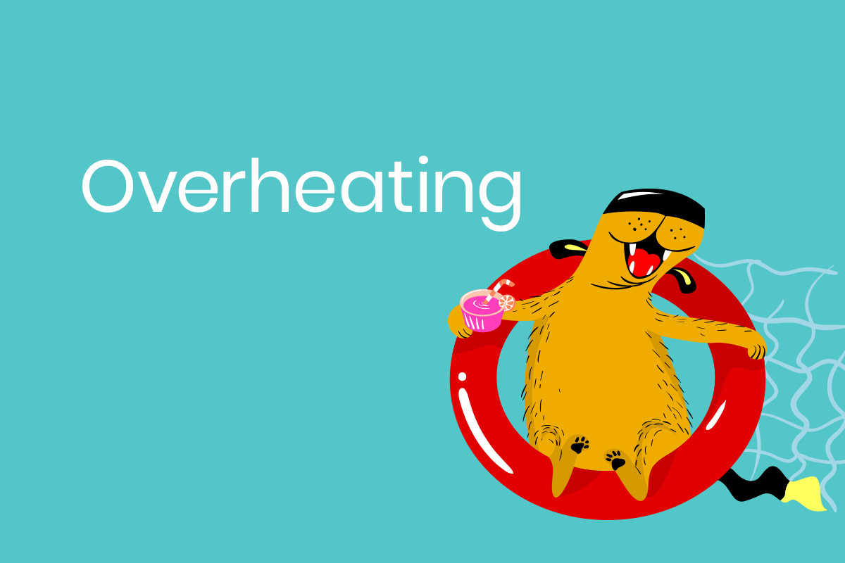 Overheating - keep your pets cool