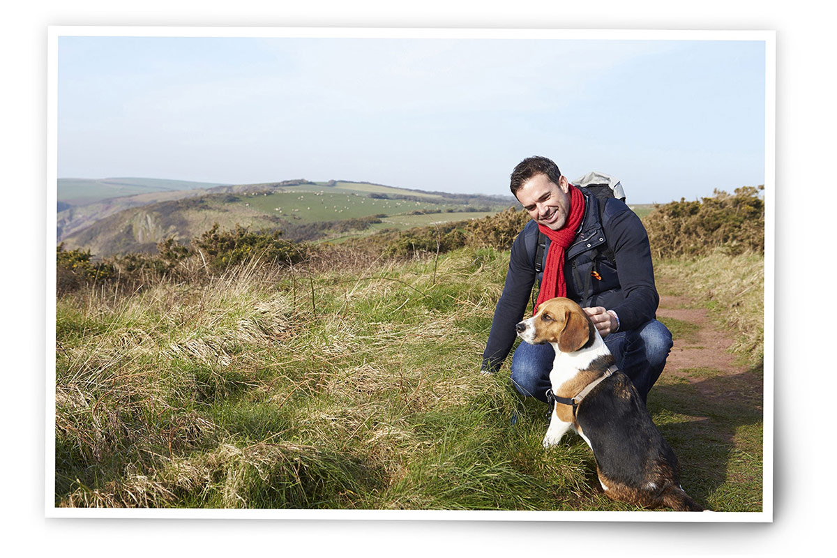 dogs-on-holiday-out-in-the-countryside