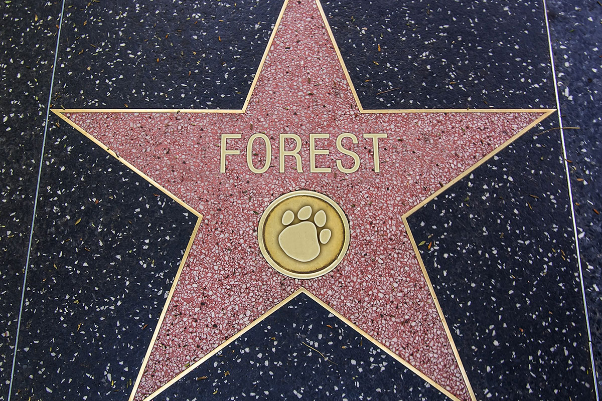 Forest-Film-Star-Hollywood