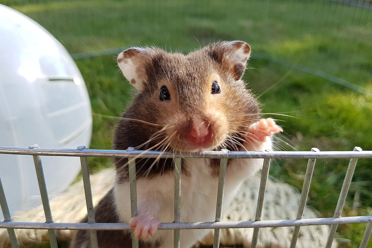 betty the hamster outside in a pet cage waving
