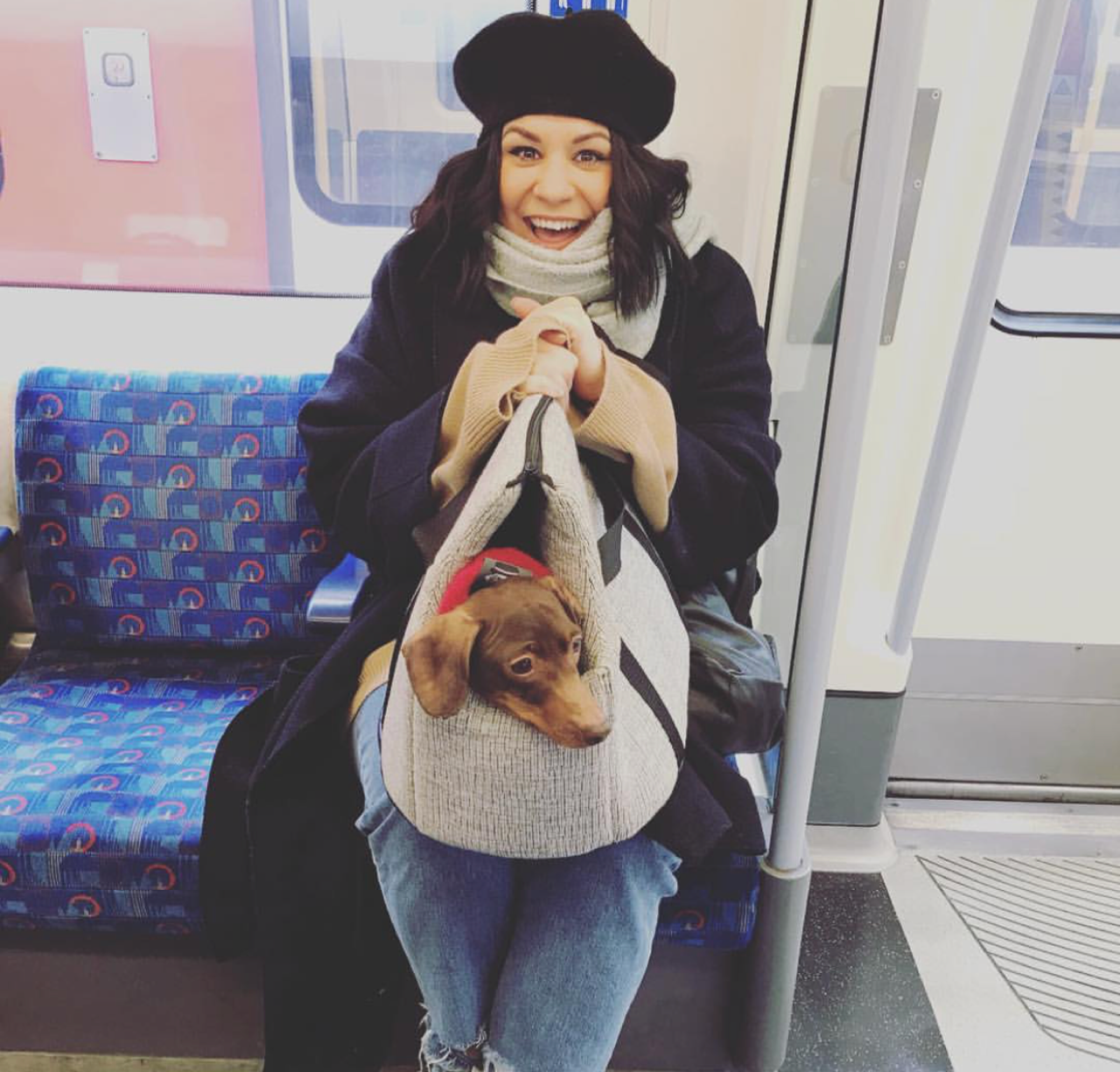 cute mini dachshund in his grey pet carrier sitting on his owners lap in the london underground