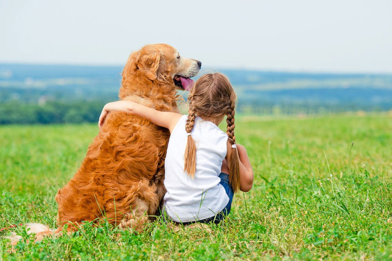 gorgeous curly dog being cuddled by a young girl