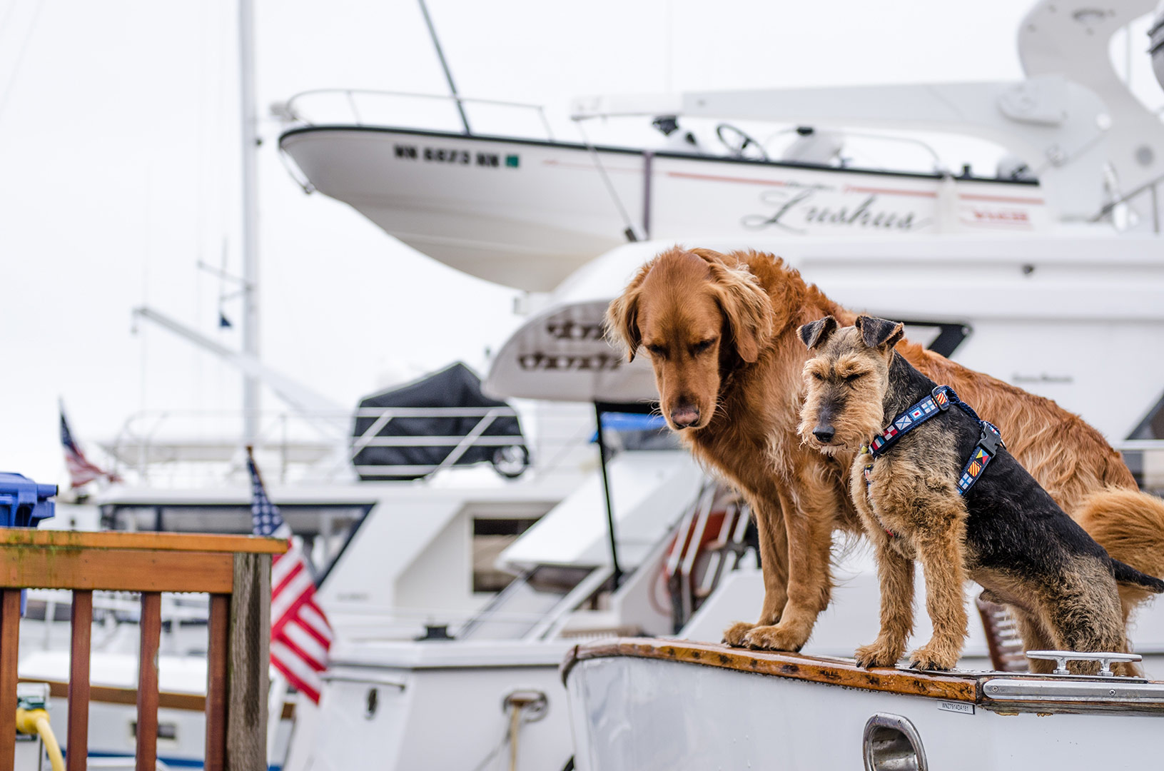 two friendly dogs sitting on a boat looking into the water