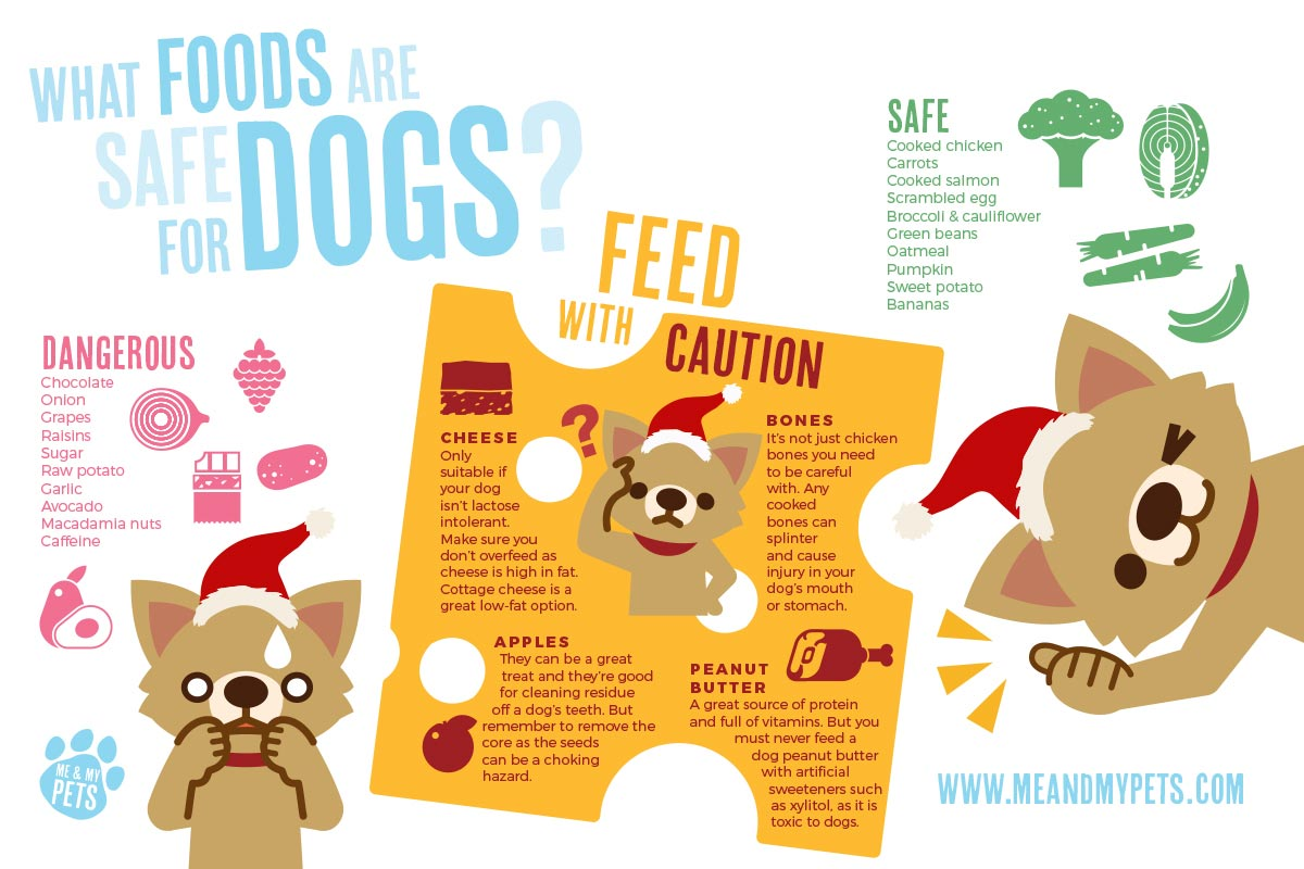 what not to feed your dog this christmas graphic