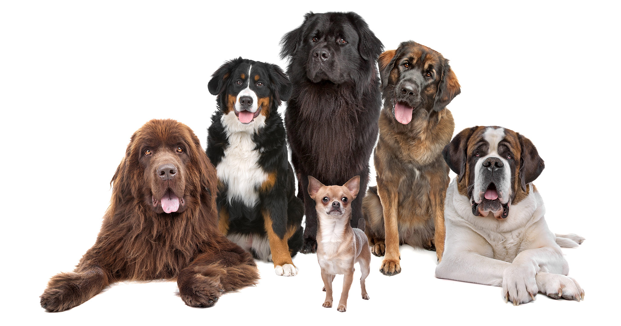 Selection of different dog breeds