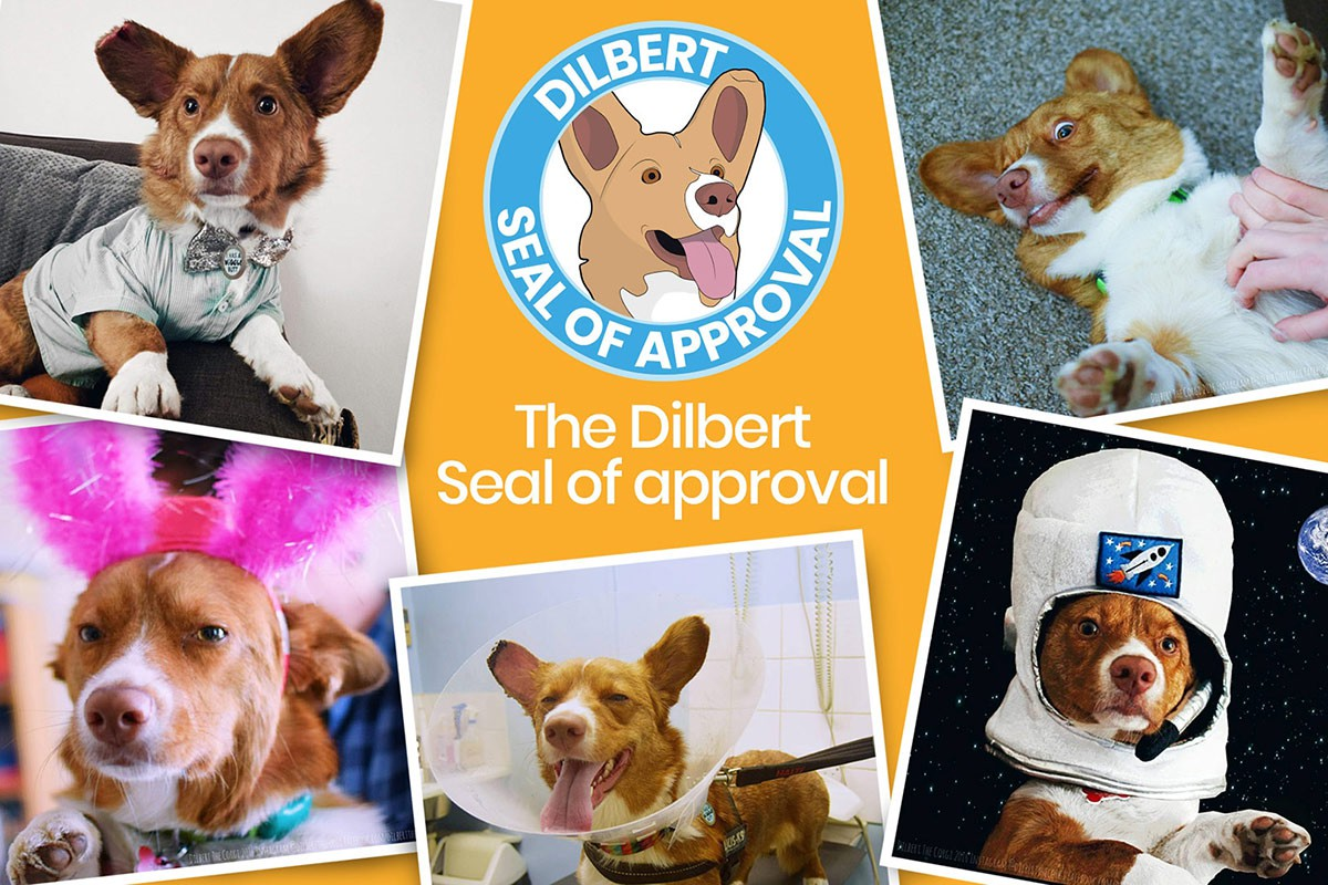 graphic for dilbert the corgi with cute pictures of him in outfits and more