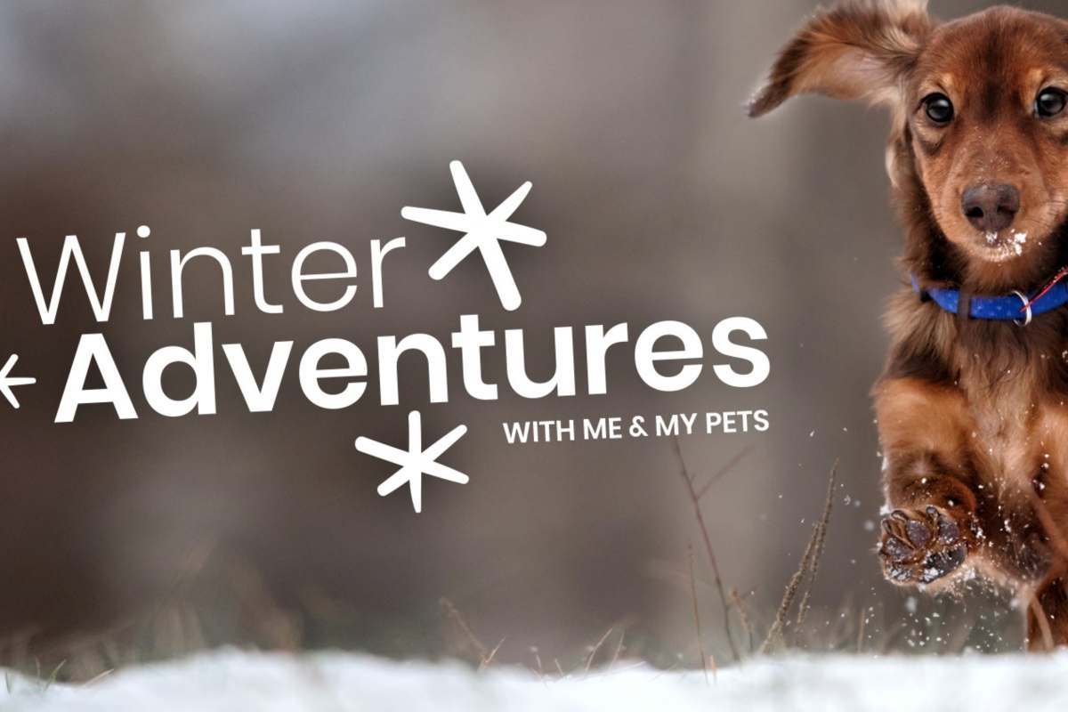 Winter Adventures: How To Keep Your Dog Safe In Cold Weather