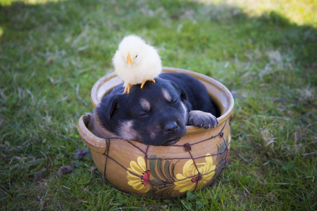 Me-My-Pets-blog-dog-friendly-easter-treats-picture-of-a-puppy-and-a-chic