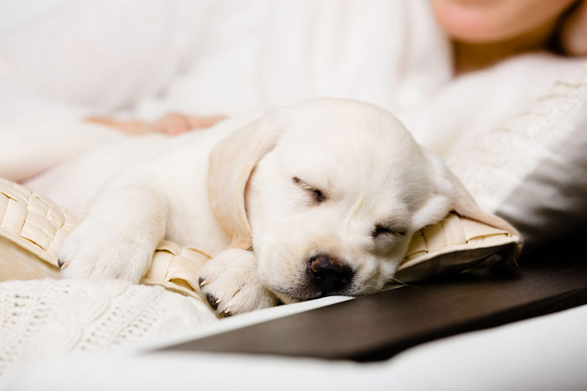 Me-My-Pets-blog-getting-a-puppy-picture-of-a-sleeping-puppy