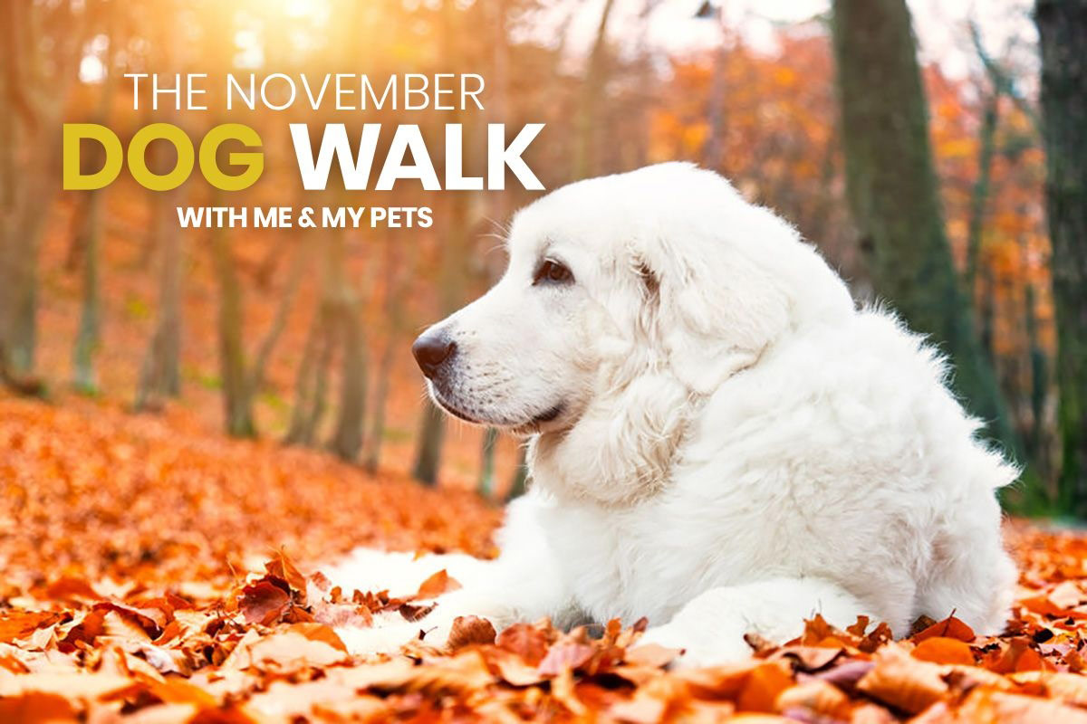 You're Invited To The Me & My Pets November Dog Walk!
