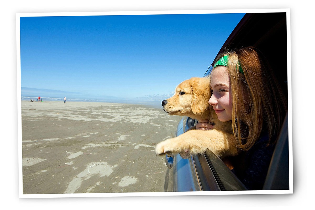dogs-on-holiday-in-the-car