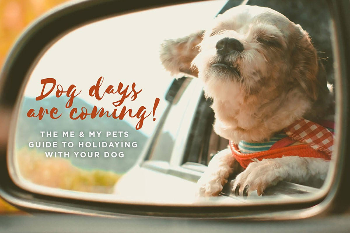 dogs-on-holiday-me-and-my-pets-blog