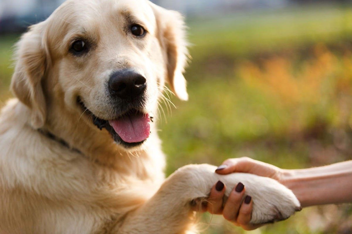 image of dog holding out its paw