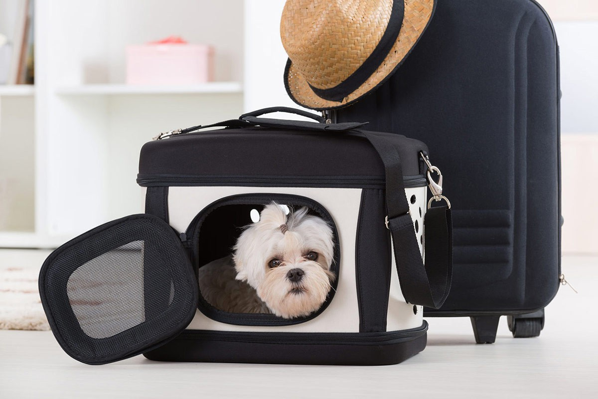 small-white-maltese-dog-in-travel-carrier-bag-with-suitcase-packed